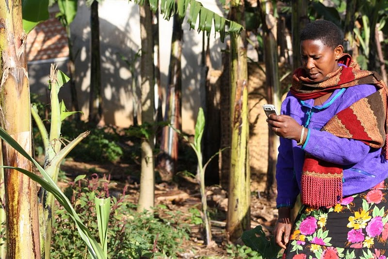 "Community Knowledge Workers act as valuable local intermediaries, bridging the ""last kilometer"" to bring essential information to other rural farmers in Uganda. Here, a CKW uses her high-end mobile phone to check for information on banana wilt."